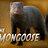 TheMongoose82 profile