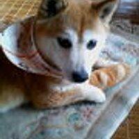 miho | Social Profile