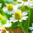 The profile image of arikawahiro_bot