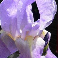 Fleursdemylene