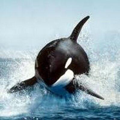 orcaz | Social Profile