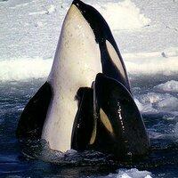 Amer Cetacean Soc | Social Profile