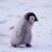 bot_penguin