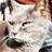 The profile image of syoichi01