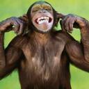 Crazy Monkey (@thecrazymonkey) Twitter