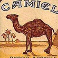 CamelTrophy