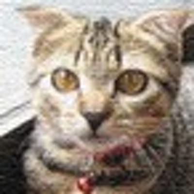 伏屋彰彦 | Social Profile