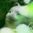 prj_kamiokabe's avatar