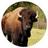 buffalolibrary profile