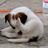 Doug_E_Stile profile
