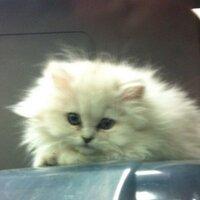 Kitty Kitty433 | Social Profile