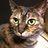 猫好き安和のアイコン