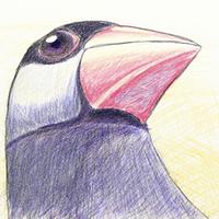 文鳥(裏切り者) | Social Profile
