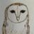 OwlStory