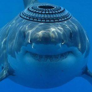 Zionist Shark Social Profile