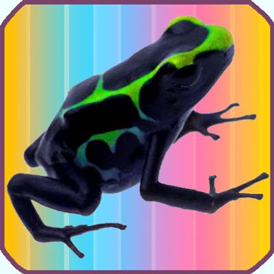 Data Frog | Social Profile