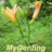 The profile image of MyGenting