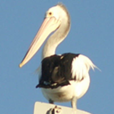 NyaRuRu   Social Profile