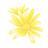 chrysanth_m