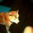 The profile image of simotuge