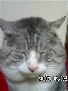 The profile image of KurukunTwitte