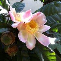 udom-rath | Social Profile