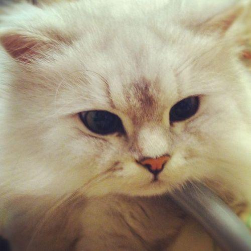 CatCadi@スーパーカープ to超熊 Social Profile