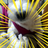 お茶クン   Social Profile
