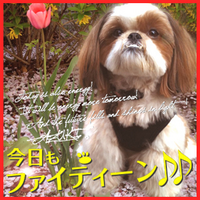 AZUKI_CHANG | Social Profile
