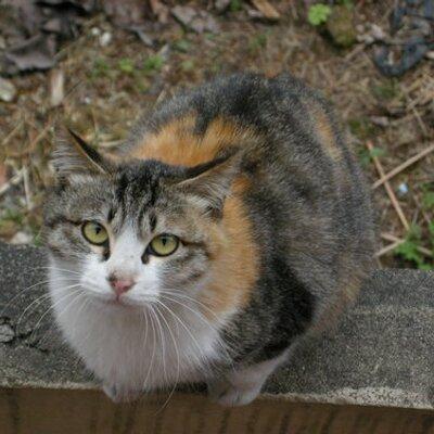 tarorain | Social Profile