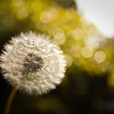White Daydreams | Social Profile