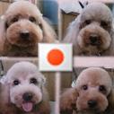 ボス犬(子分4匹) Social Profile