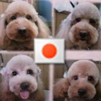 ボス犬(子分4匹) | Social Profile