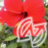 The profile image of hibiscus_ajk