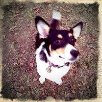 Stormy Pewpie | Social Profile