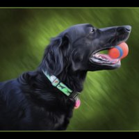 NK Dog Walking | Social Profile