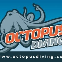 Octopusdiving
