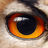 220px eagle owl  eye normal