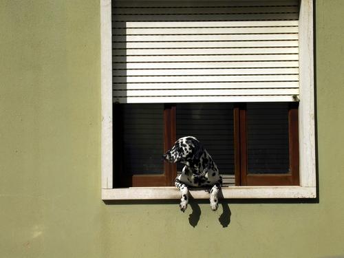 00858 spanishdog 1280x960