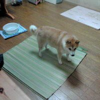 I love Koenjiおおくのののこ | Social Profile