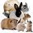 @Animalsupdate