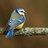 @BirdsNewsdaily