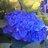 The profile image of miwa_purple