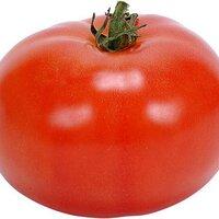 groentetuin1