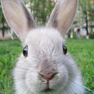 The Rabbit   Social Profile