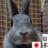 パールうさぎ yatokkosattoko のプロフィール画像
