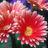 Flower3 normal