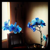 A Living Orchid | Social Profile