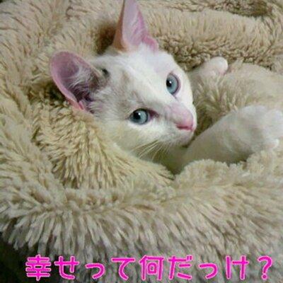 ともちん | Social Profile