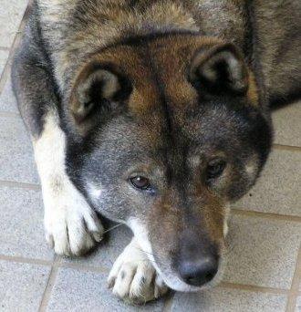 天弓号(イケメンすぎる四国犬) Social Profile
